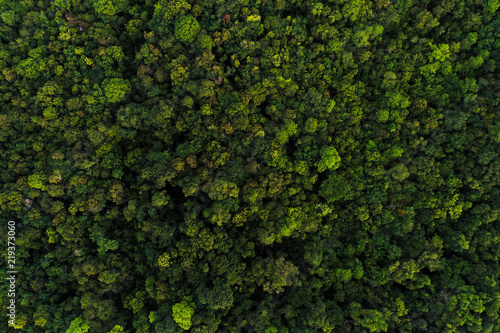 Photo Green tree deep tropical rainforest look down aerial view from drone