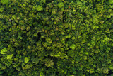 Fototapeta Fototapety na ścianę - Green tree deep tropical rainforest look down aerial view from drone
