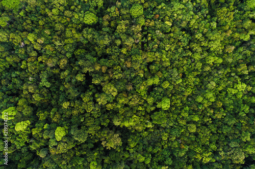 Green tree deep tropical rainforest look down aerial view from drone Canvas Print