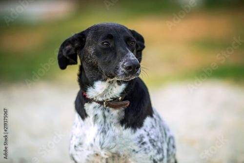 Foto  portrait of a mongrel dog