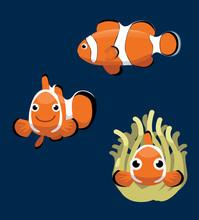Ocellaris Clownfish Cartoon Ve...