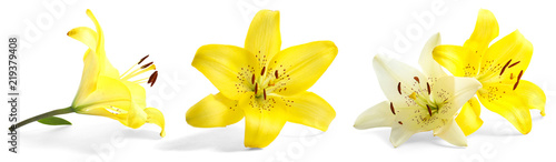 Set with beautiful lilies on white background