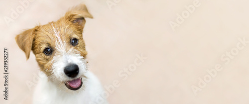 Happy smiling jack russell terrier dog pet puppy - web banner with copy space - 219382277