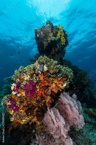 Staande foto Koraalriffen sea fan or gorgonian on the slope of a coral reef with visible water surface and fish