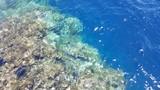 Fototapeta  - Egipt Sharm el sheikh  rafa koralowa
