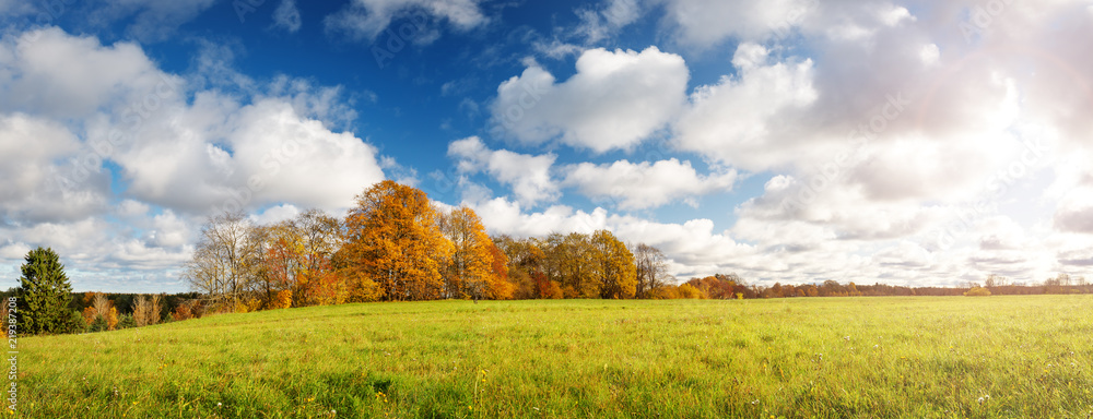 Fototapety, obrazy: trees with multicolored leaves on the field