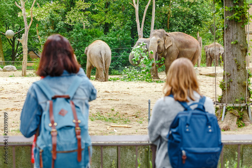 Two girls friends students watching at elephant family feeding in the zoo