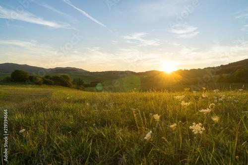 Foto op Plexiglas Weide, Moeras Meadow flowers in the sunset. Slovakia