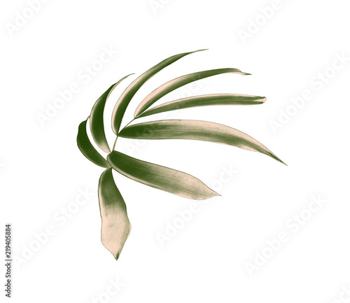 Canvas Prints Floral green palm leaf isolated on white background with clipping path