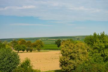 Fototapeta na wymiar Blick in die Weinberge Rheinhessen
