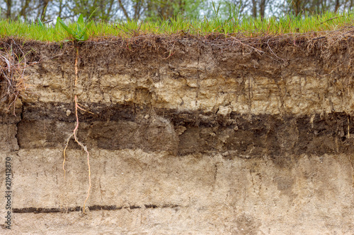 Valokuva  Stratigraphic section of soil with layers and grass roots