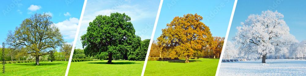 Fototapeta Vier Jahreszeiten - Baum Panorama
