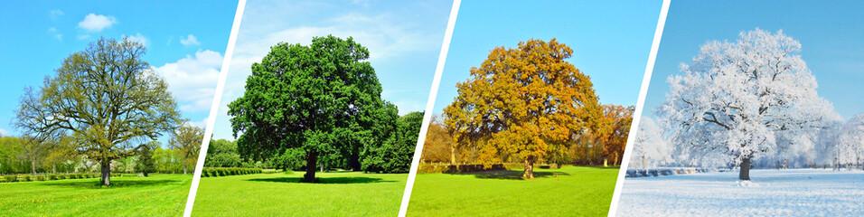 Vier Jahreszeiten - Baum Panorama