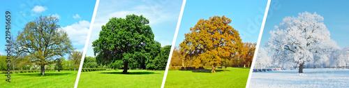 Photo sur Toile Vert chaux Vier Jahreszeiten - Baum Panorama