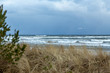 Svanar flyger över havet en blåsig vinterdag