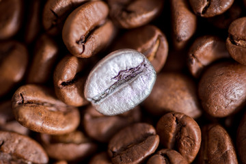 FototapetaIndividuality, standing out from a crowd concept, close up of a single bright, gold coffee bean over many dark ones with copy space