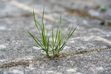 Grass Growing In The Cracks Between Garden Tiles