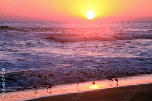 Foto op Plexiglas Bruin Gold and Purple Sunset over Tropical Birds Grazing on Pacific Ocean Beach .