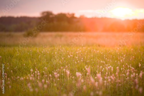 Canvas Prints Honey field of flowers on beautiful sunset background in colorful tones, soft focus and blur