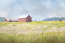 Textured Photograph Of A Red Barn In A Field Of Yellow Wildflowers In The Country