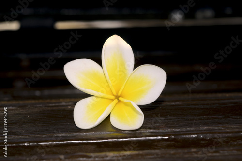 Foto op Aluminium Frangipani Frangipani or plumeria flower on wooden blur style for background,spa concept