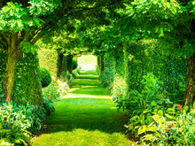 Colorful Tunnel Of Green Plants