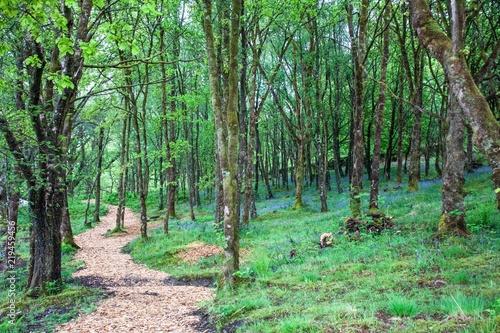 Märchenwald am Loch Lomond
