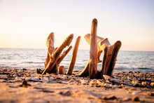 Driftwood On The Sand Sea Coast With Shells On An Early Morning