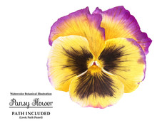 Yellow Pansy Flower With Watercolor