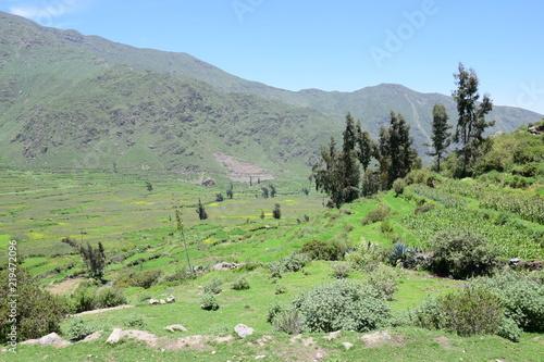 Fotobehang Olijf Green field od Cabanaconde