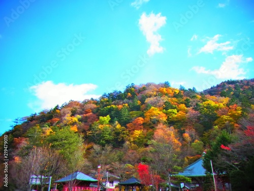 Photo Stands Turquoise autumn leaves in japan