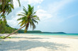 Coconut palm tree on white sand beach and clear sea with blue sky and cloud