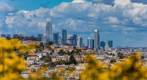 Photo  San Francisco skyline panorama with blooming flowers in the foreground