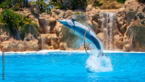Plakat Pokaż piękne skoki delfinów w basenie zoo.