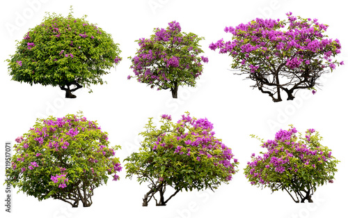 Foto  Pink flowers or Fueng Fah flower isolate background with Clipping Path