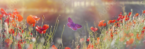 Fotografie, Obraz  Butterfly and field with poppy flowers - beautiful nature, beauty in nature