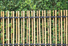 Bamboo Fence And Green Tree,Natural Wall Background