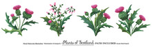 Scottish Wild Plants Boutonnie...