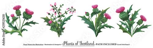 Fototapeta Scottish wild plants boutonniere, thistle bouquet