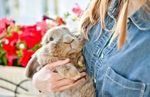 Young Woman Hugs Big Cute Rabbit Friend Pet In Her Hands