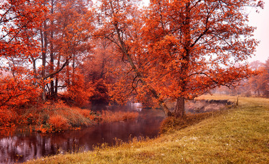 Fototapeta Wiejski Autumn misty morning in forest creek