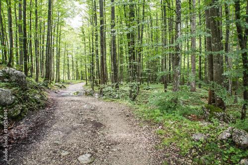 Photo Stands Road in forest Wanderweg zum Triglav, Jülische Alpen