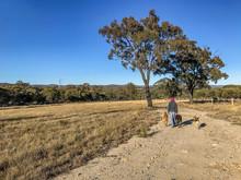 Country Scene On Australian Ru...