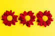 canvas print picture - Dark red flowers on a yellow background. Copy space. Top view