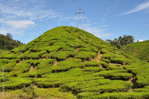 Foto op Canvas Pistache Tea plantations in Cameron Highlands