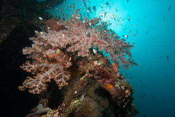 Fototapeta na wymiar Tropical marine biodiversity
