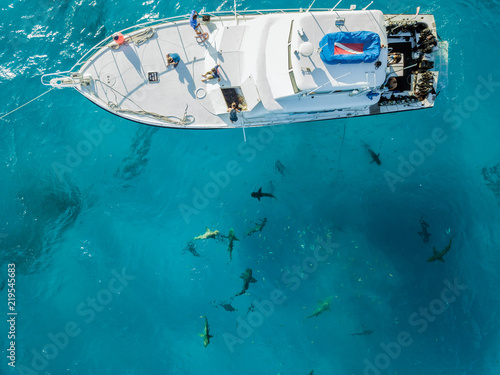 Drone view on sharks at the Bahamas