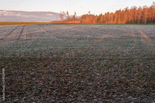 Autumn field, covered with frost, sun rays, Switzerland 1