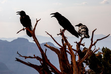 Birds Perched On A Tree At The Grand Canyon In Arizona