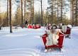 Reindeer Safari Sledding in Winter Forest Rovaniemi Finland Lapland